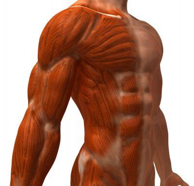 Jak przygotować się do treningu na masę mięśniową?